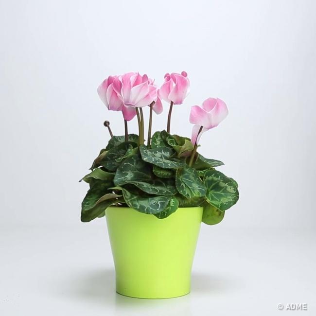 Всего 3 ингредиента, чтобы вернуть любимому растению жизнь.