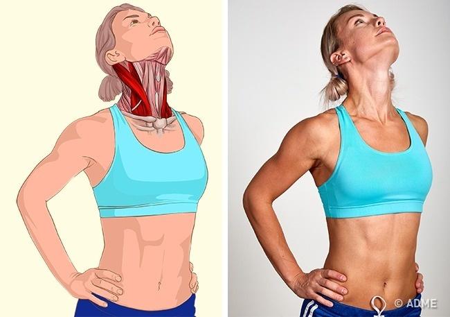 18 изображений, которые наглядно покажут, какие мышцы вы растягиваете.